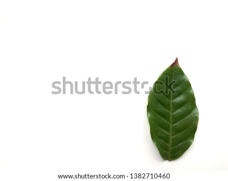Green leaves on a white background #1382710460
