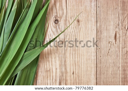 green leaves on the background of a wooden wall