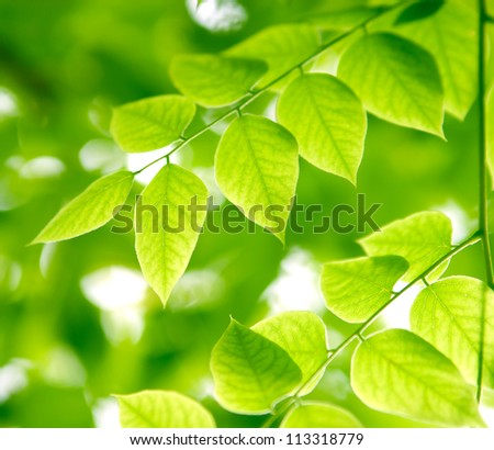 Green leaves on the branches in a forest