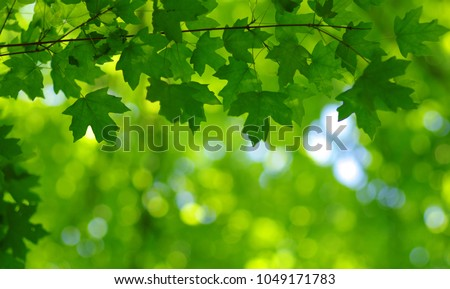 Green leaves on the spring tree background