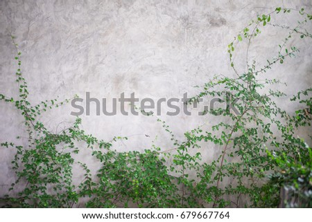 Green leaves on wall brick background, Ivy on wall
