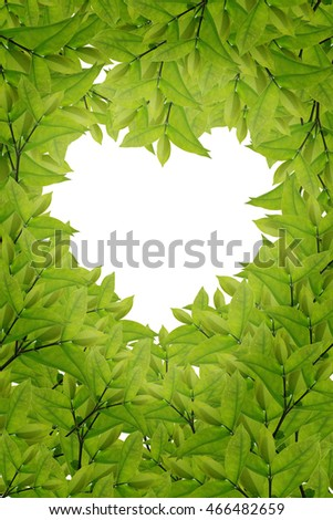 green leaves on white background,Summer branch with fresh green leaves,green,green,green   #466482659