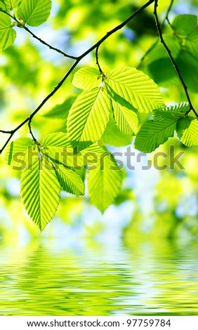 Green leaves over water reflection
