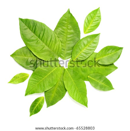 Green leaves over white