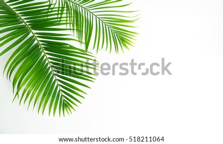 Green leaves palm isolated on white, green leaves palm from tropical.