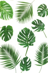 green leaves pattern isolated from tropical palm, monstera leaf on a white background. top view.abstract.