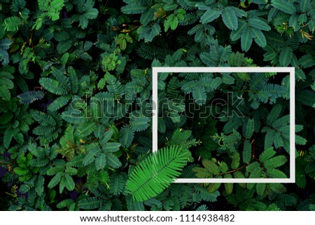 Green leaves pattern with white frame for nature concept,tropical leaf  tree textured background #1114938482