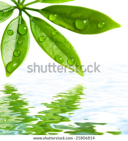 Green leaves reflected in water