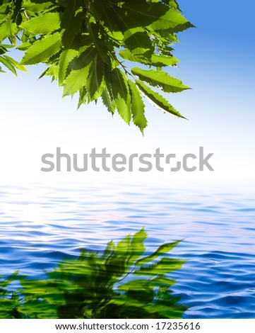 green leaves reflected on the blue water (chestnut)