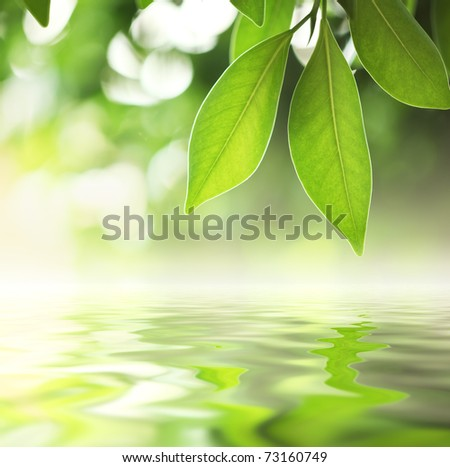 Green leaves reflecting in river water, closeup. Copyspace. #73160749