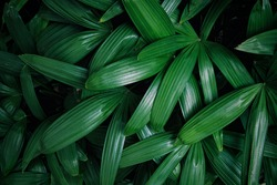 green leaves texture and background