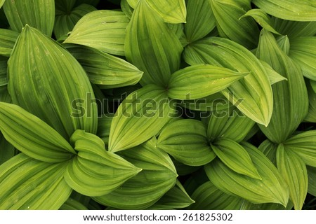 Green leaves texture background macro