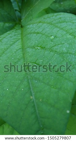 Green leaves. There are beautiful foliage patterns. On the leaves there are a lot of small droplets of water droplets, giving a fresh feeling.