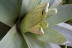 Green leaves, tropical and exuberant nature. Foliage