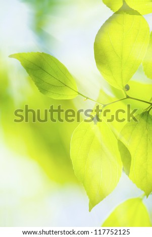 Green leaves under sun background