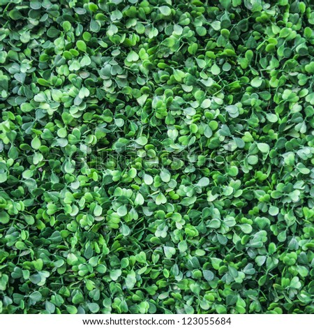 green leaves wall background.