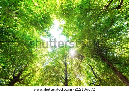 Green leaves with a bright sun shining through