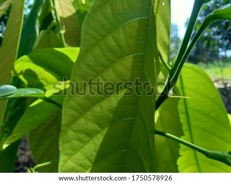 Green leaves with a natural background