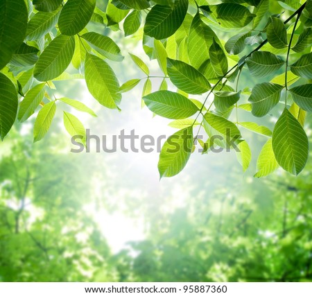 green leaves with sun #95887360
