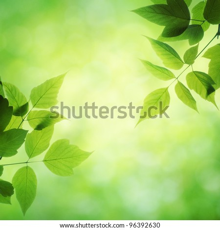 Green leaves with sun. Spring background.