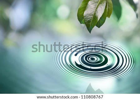 Green leaves with water drop above water