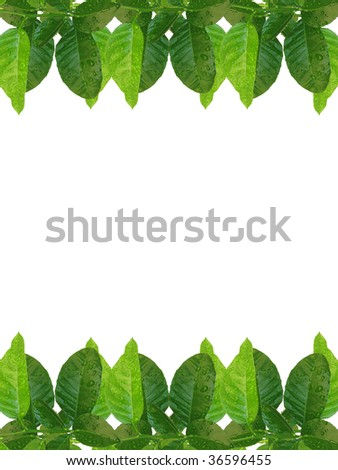green lemon leaves frame - similar images available