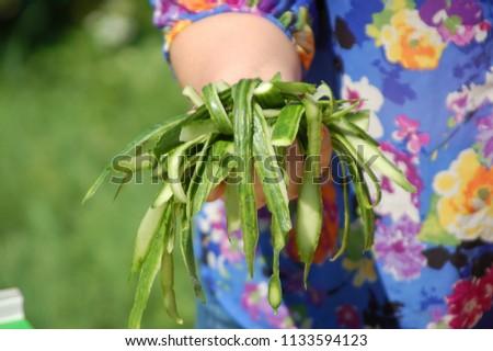 Green lifestyle. Summer dish preparing. Female prepare vegetarian food in the open air. Cucumber peels in the hand of woman. #1133594123