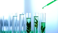 Green liquid poured in laboratory tubes with plants, genetic breeding, cosmetics