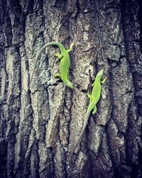 Green lizard sitting on the tree.