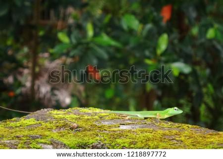 Green Lizard Wallpaper Background #1218897772