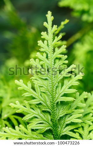 Green lush ferns growing in forest in wild