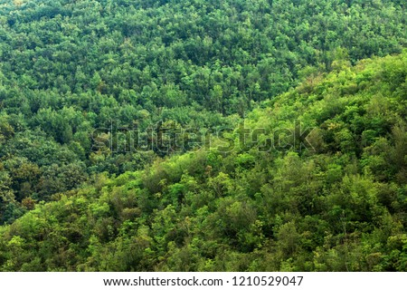 Green lush foliage, lush forest on hill, wilderness, nature. #1210529047