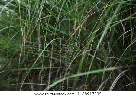 green lush grass hanging down at evening time #1188917395