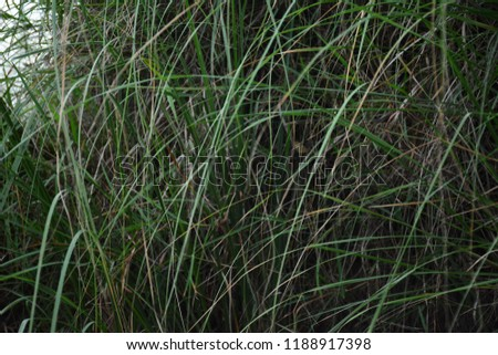 green lush grass hanging down at evening time #1188917398