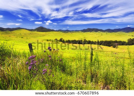 Green lush pasture for cattle on hill ranges of cobark near Barrington tops. Australian agriculture farm producer of beef in natural environment. Foto d'archivio ©