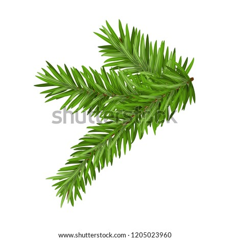 Green lush spruce or pine branch. Fir tree branch isolated on white christmas element.