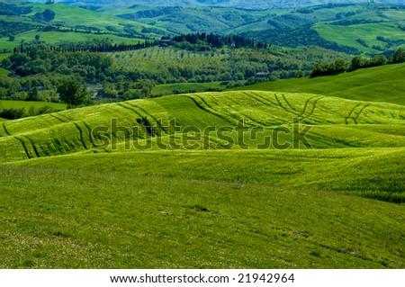 Green luxuriant sloping fields of wheat in the Tuscany region of Italy. This is in Val d'Orcia, a valley in the heart of Tuscany that is a UN World Heritage Site. - stock photo