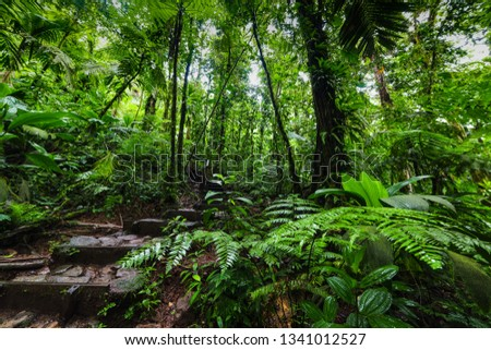 Green luxuriant vegetation in Basse Terre jungle in Guadeloupe, French west indies. Lesser Antilles, Caribbean #1341012527