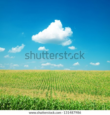 green maize field under clouds