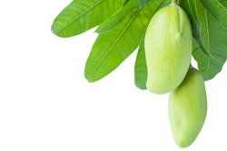 Green mango and leaf isolated on white background,sour fruit for snack and healthy,