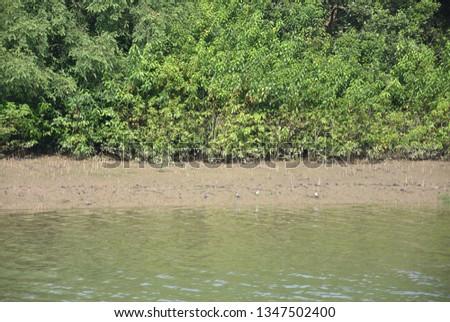 Green Mangrove Forest