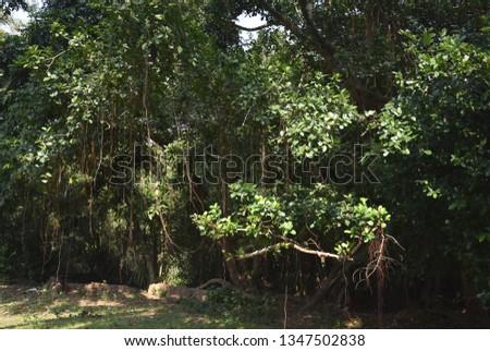 Green Mangrove Forest #1347502838