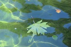 Green Maple Leaf Floating in Green Water Abstract
