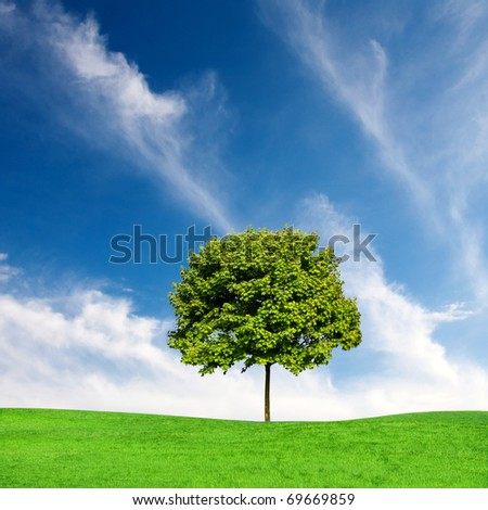 Green maple tree and blue sky