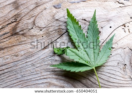 Green marijuana leaf over wood #650404051