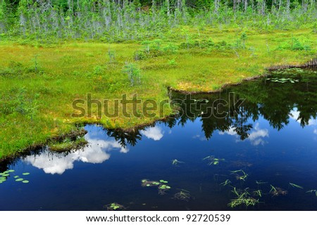Green marshy grasses against a calm reflected blue sky in a clear northern maine lake with puffy white clouds reflected in the water