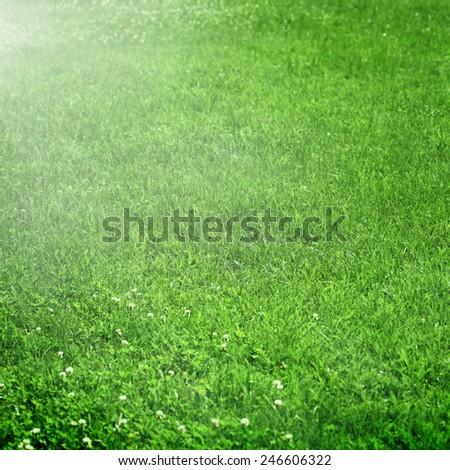 Green meadow #246606322