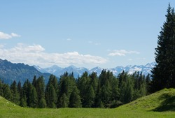 green meadow and pinetrees with high mountains in the background