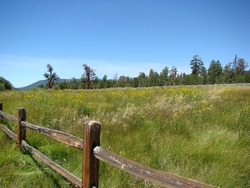 Green Meadow and Wood Fence in the Southern California Mountains of Big Bear Lake