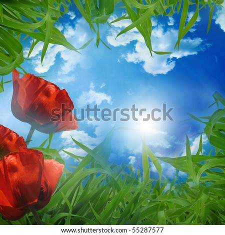 green meadow - beautiful background with Poppys